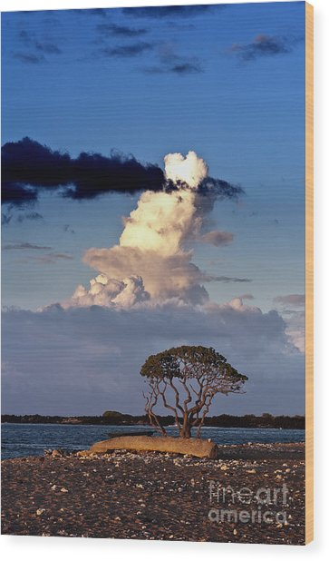 Tree At The Beach Wood Print by Karl Voss
