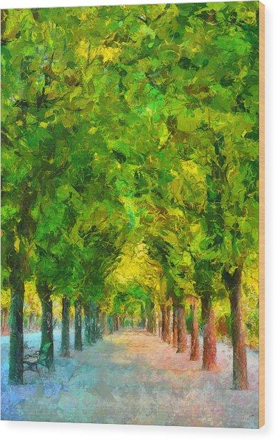 Tree Avenue In The Vienna Augarten Wood Print