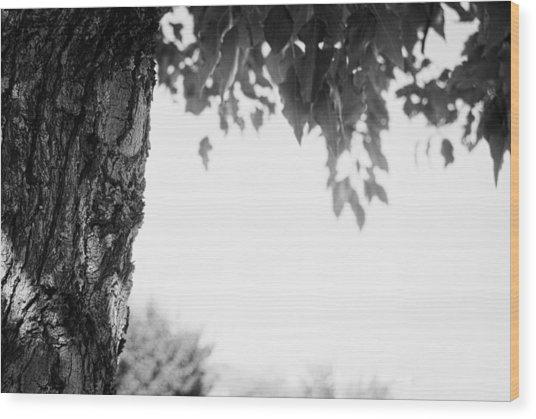Tree Bark And Leaves Wood Print