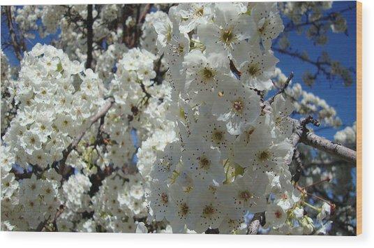 Tree Blossom  Wood Print by Iam Wayne