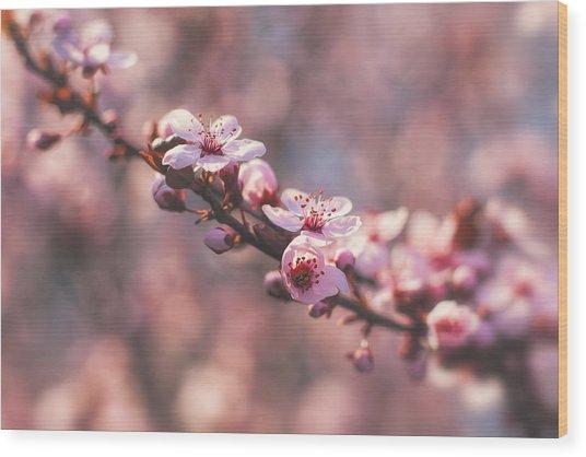 Tree Branch Bloom Wood Print