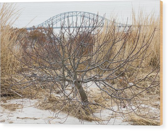 Tree By Captree Bridge Wood Print