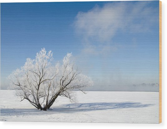 Tree By The River Covered With Hoar Frost. Wood Print