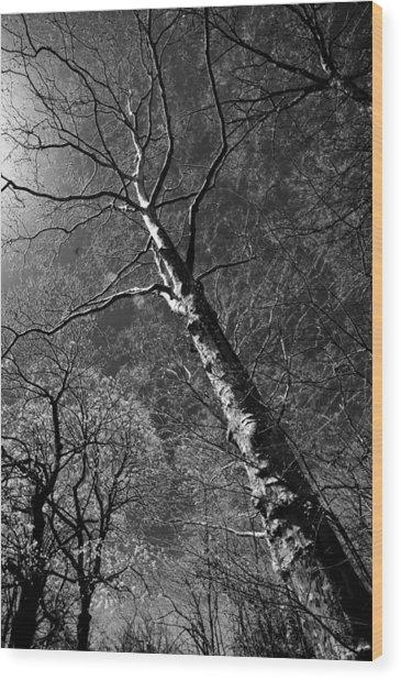 Tree Capillaries Wood Print