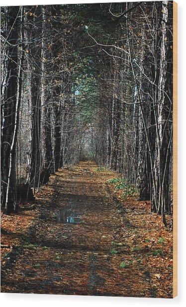 Tree Chute Wood Print
