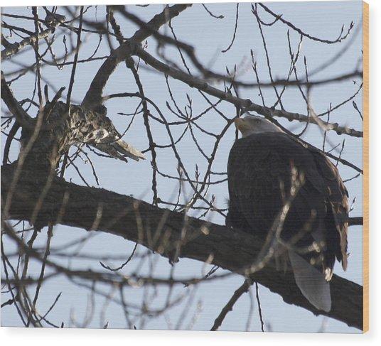 Tree Eagle Wood Print by Valerie Wolf