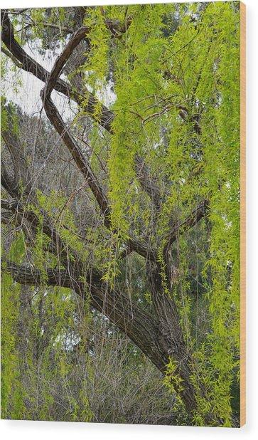 Tree Green Wood Print