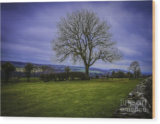 Tree - Hadrian's Wall Wood Print