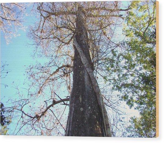 Tree Hugger 4 Wood Print by Van Ness