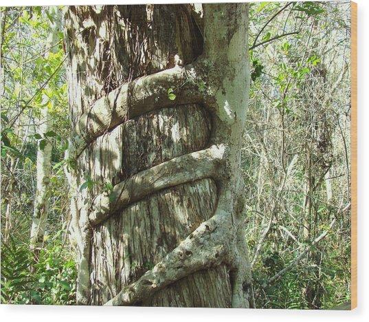 Tree Hugger 5 Wood Print by Van Ness
