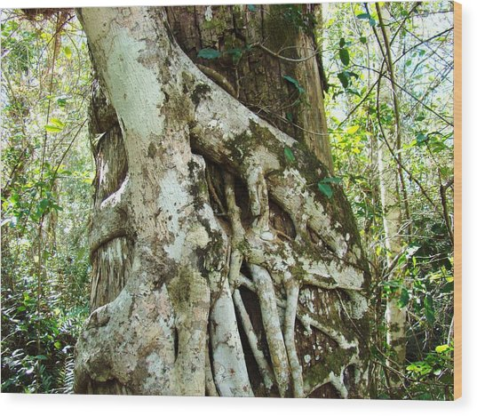 Tree Hugger 6 Wood Print by Van Ness