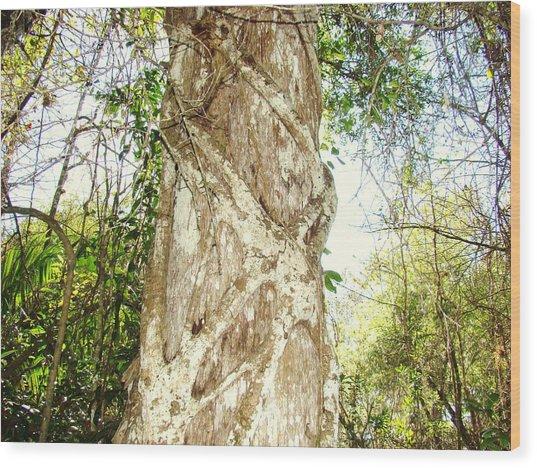 Tree Hugger 7 Wood Print by Van Ness