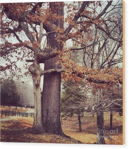 Tree Hugging Wood Print