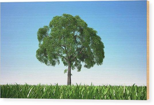 Tree In A Field, Artwork Wood Print by Leonello Calvetti