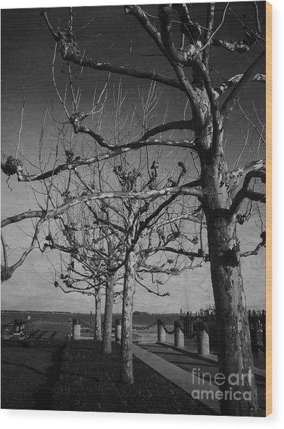 Tree In A Row  Wood Print