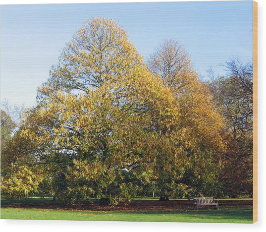 Tree In Kew Gardens Wood Print