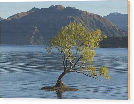 Tree In Lake Wanaka Wood Print