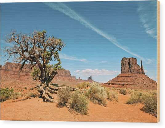 Tree In Monument Valley Tribal Park Wood Print