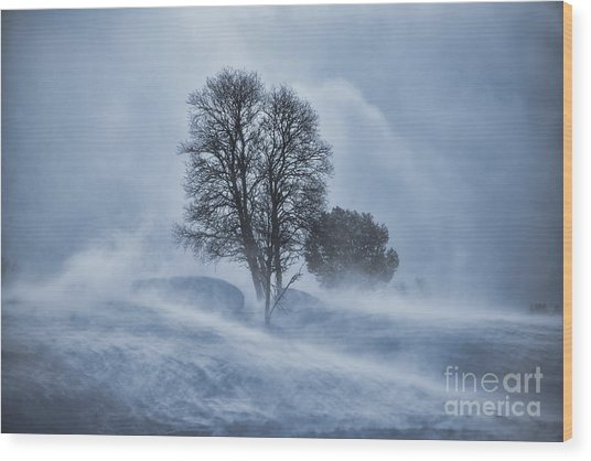 Tree In Snow Blizzard Wood Print