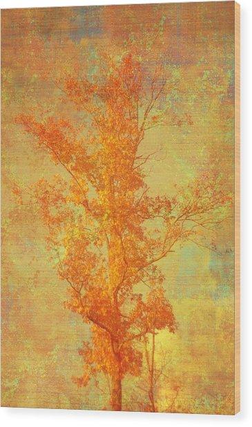 Tree In Sunlight Wood Print