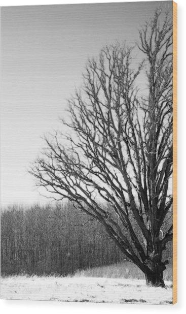 Tree In Winter 2 Wood Print