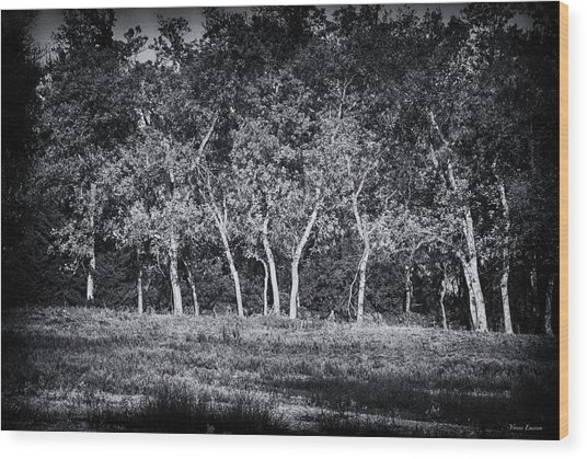 Tree Line In Autumn  Wood Print