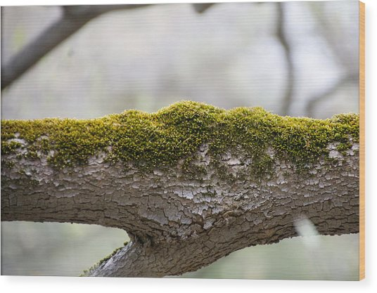 Tree Moss Wood Print by Mark Holden