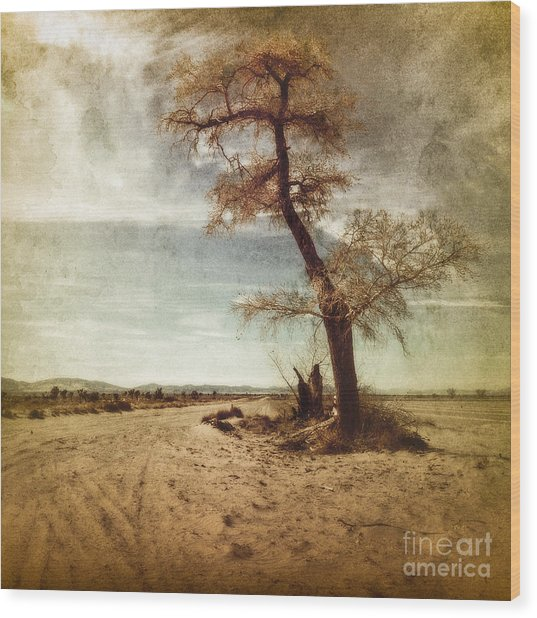 Tree Near The Road Wood Print by Pam Vick