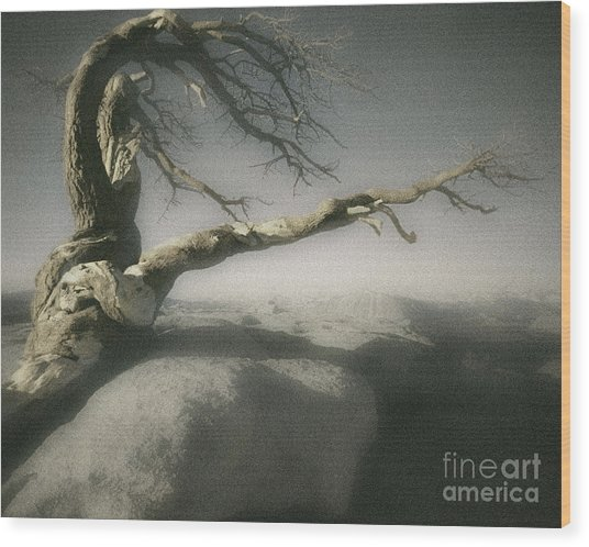 Tree Of Ages Wood Print