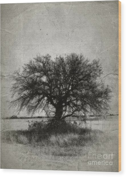 Tree Of Life - No.1958v Wood Print