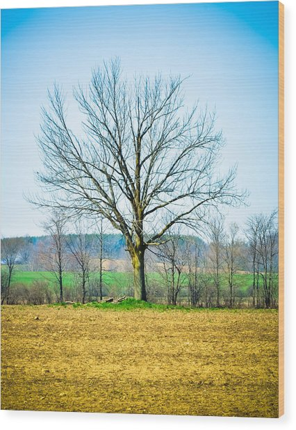 Tree Of Life Wood Print by BandC  Photography