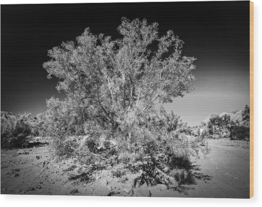 Tree Of The Desert Wood Print