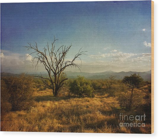 Tree On Caballo Trail Wood Print