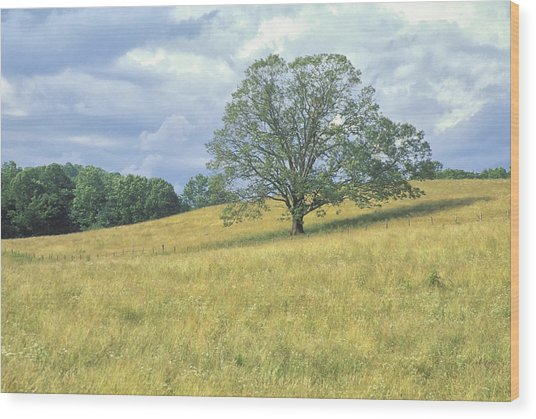 Tree On The Hill Wood Print