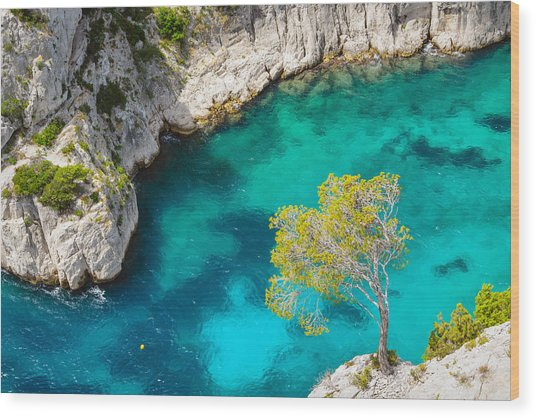 Tree On Turquoise Waters Wood Print