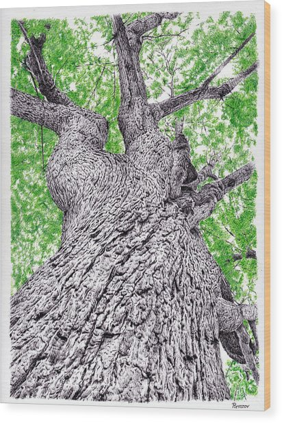 Tree Pen Drawing 4 Wood Print
