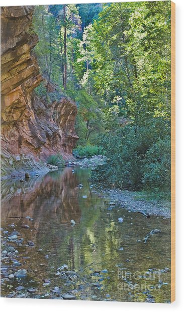 Wood Print featuring the photograph Tree Reflection by Mae Wertz
