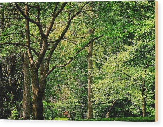 Tree Series 3 Wood Print
