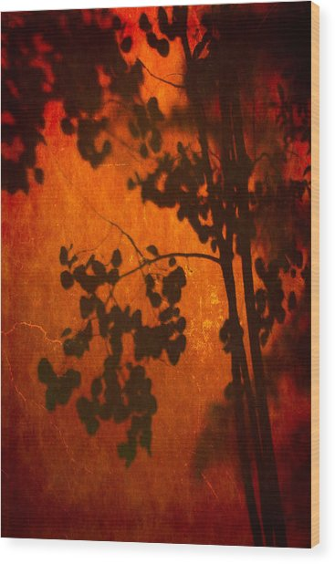 Tree Shadow On Fiery Wall Wood Print