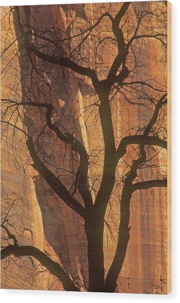 Tree Silhouette Against Sandstone Walls Wood Print