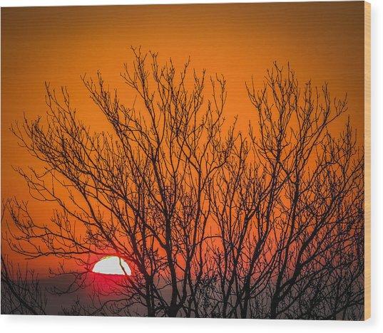 Tree Silhouetted By Irish Sunrise Wood Print
