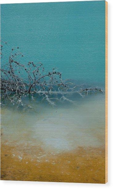 Tree Skeleton Wood Print by Sarah Crites