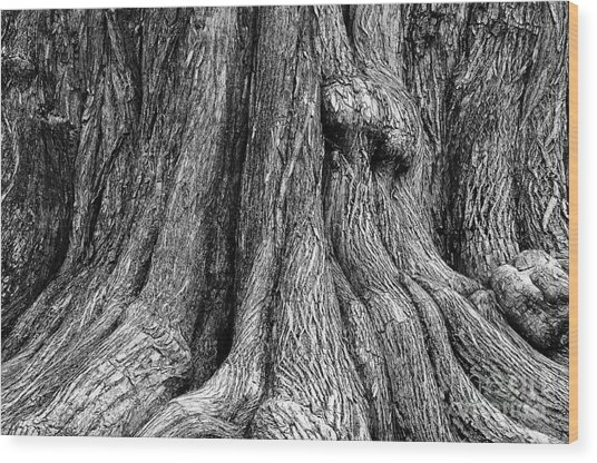 Tree Trunk Closeup Wood Print