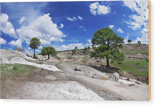 Tree Valley Wood Print by Camilla Fuchs