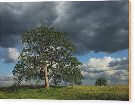 Tree With Storm Clouds Wood Print