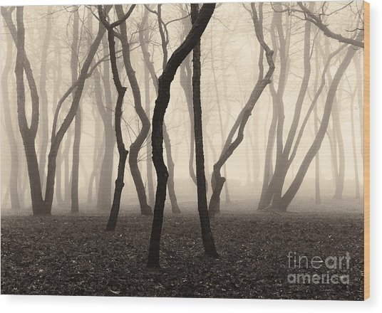 Trees And Fog No. 1 Wood Print