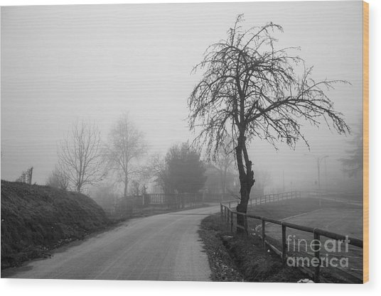 Trees And Fog Wood Print