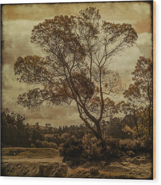 Trees And Hot Sand Wood Print