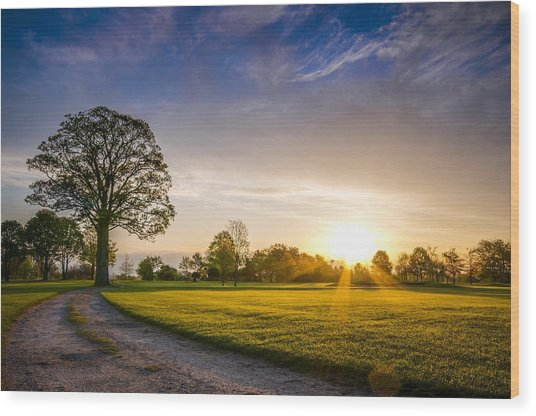 Trees At Dawn On Golf Course Wood Print