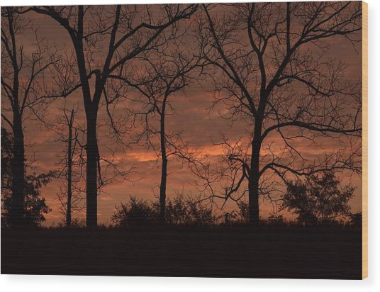 Trees At Sunrise Wood Print